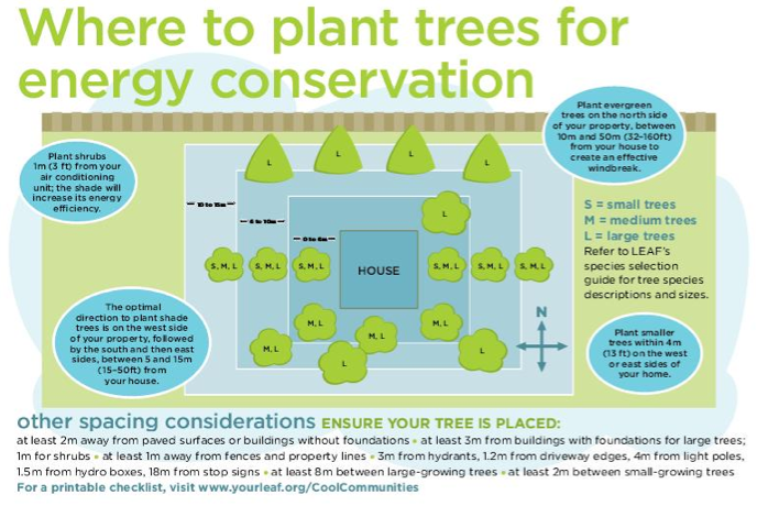 where-to-plant-trees-for-energy-conservation-from-yourleaf